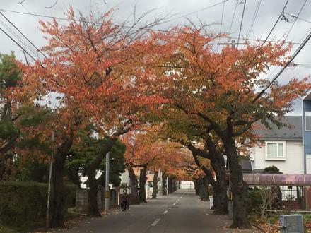 秋の桜ヶ丘通り