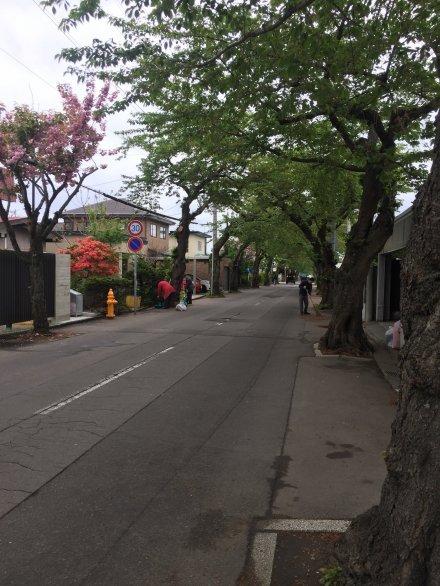 桜ヶ丘通りの清掃しました