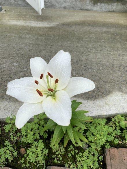 名前の知らないお花です